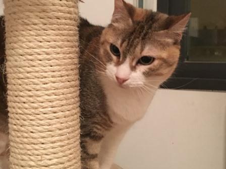el gato no muestra parásitos en el examen pero tiene la barriga hinchada